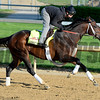 Caption: Commanding Curve<br /> Kentucky Derby contenders in training at the Churchill Downs in Louisville, Ky., on April 19, 2014.<br /> KentuckyDerby 2Works4_23 image163<br /> Photo by Anne M. Eberhardt