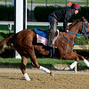 Caption: Sugar Shock with Seth VanDyke<br /> Kentucky Derby contenders in training at the Churchill Downs in Louisville, Ky., on April 19, 2014.<br /> KentuckyDerby 1Works4_23 image056<br /> Photo by Anne M. Eberhardt