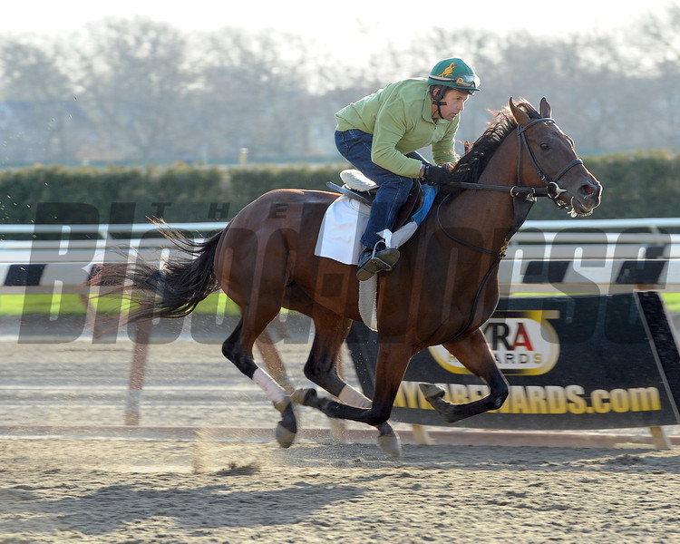 Samraat works out at Belmont Park on April 25, 2014 in preparation for the 2014 Kentucky Derby.<br /> Coglianese Photos/Susie Raisher
