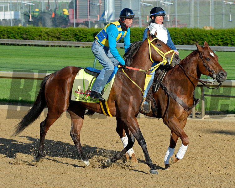 Caption: Wildcat Red<br /> Kentucky Derby contenders in training at the Churchill Downs in Louisville, Ky., on April 19, 2014.<br /> KentuckyDerby 2Works4_23 image141<br /> Photo by Anne M. Eberhardt