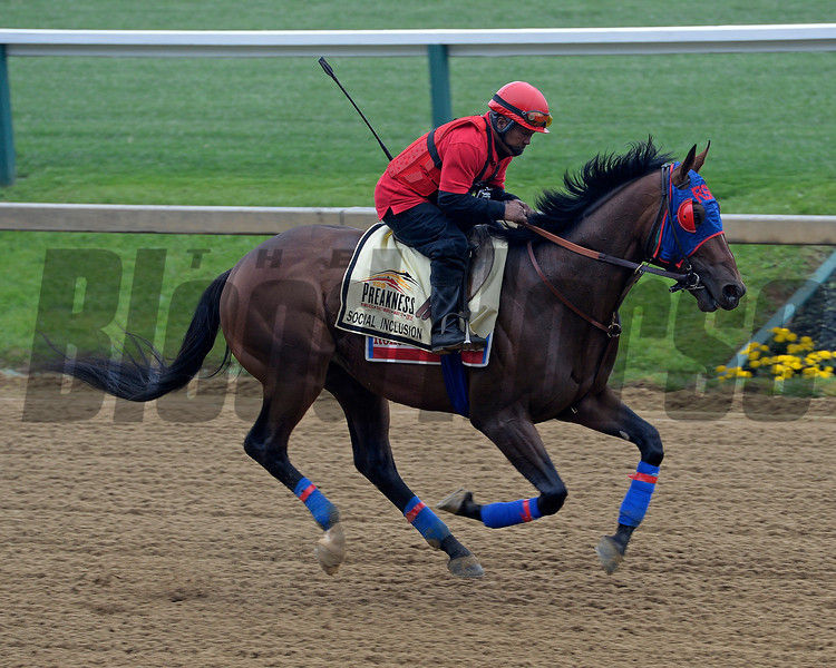 Caption: Social Inclusion<br /> Preakness Horses on track at Pimlico  in Baltimore, Md., on May 15, 2014.<br /> PreaknessHThursAMWorks2  image962<br /> Photo by Anne M. Eberhardt