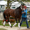 Caption: Bayern with Roberto Luna arrives.<br /> Preakness Horses arrive at Pimlico  in Baltimore, Md., on May 14, 2014.<br /> PreaknessHorsesArrive  image745<br /> Photo by Anne M. Eberhardt