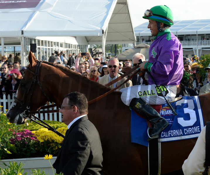California Chrome, with jockey Victor Espinoza in the irons enters the winner's circle with assistant trainer Alan Sherman leading the way after winning the second leg of thoroughbred racing's Triple Crown with his win in the 139th running of The Preakness Stakes Saturday evening May 17, 2014 at Pimlico Race Course in Baltimore, Maryland.      (Skip Dickstein