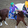 California Chrome Chad B. Harmon