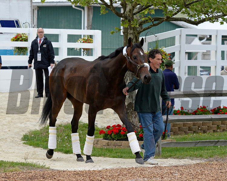 Caption: Ria Antonia arrives<br /> Preakness Horses arrive at Pimlico  in Baltimore, Md., on May 14, 2014.<br /> PreaknessHorsesArrive  image717<br /> Photo by Anne M. Eberhardt