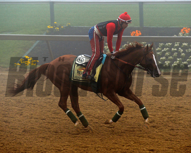 Caption: California Chrome<br /> Preakness Horses on track at Pimlico  in Baltimore, Md., on May 15, 2014.<br /> PreaknessHorsesArrive  image822<br /> Photo by Anne M. Eberhardt