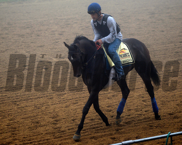 Caption: Ria Antonia<br /> Preakness Horses on track at Pimlico  in Baltimore, Md., on May 15, 2014.<br /> PreaknessHorsesArrive  image781<br /> Photo by Anne M. Eberhardt