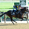 Mubtaahij - Belmont Park, May 30, 2015.<br /> Coglianese Photos/Susie Raisher