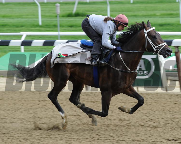 Mubtaahij (IRE) gallops at Belmont Park May 21. <br /> Coglianese Photos/Susie Raisher