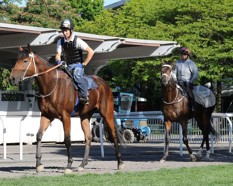 Mubtaahij - Belmont Park, May 22, 2015.<br /> Coglianese Photos/Susie Raisher