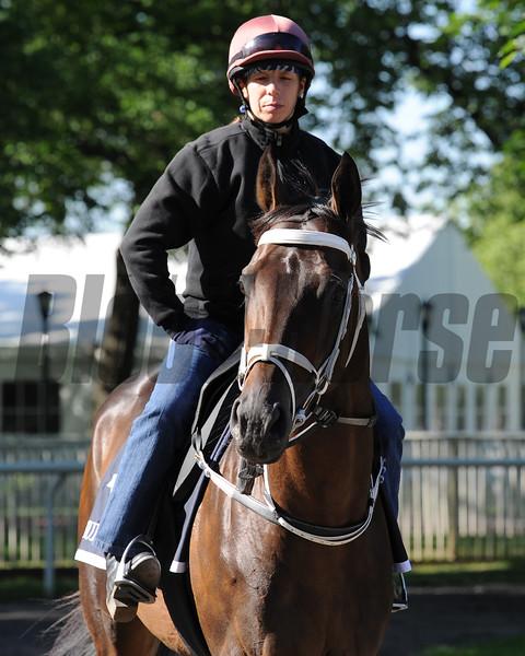 Mubtaahij (IRE) gallops at Belmont Park May 24, 2015.<br /> Coglianese Photos/Susie Raisher