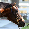 Tale of Verve - Belmont Park, May 30, 2015.<br /> Coglianese Photos/Susie Raisher