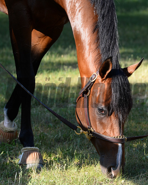 Tale of Verve - Belmont Park, May 30, 2015.<br /> Coglianese Photos/Susie Raisher