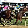 American Pharoah<br /> Kentucky Derby 141<br /> Dave Harmon Photo
