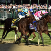 American Pharoah<br /> Kentucky Derby 141, 2015<br /> Dave Harmon Photo