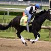 Upstart<br /> Dave Harmon Photo