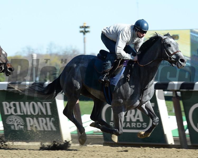 El Kabeir works towards the Kentucky Derby at Belmont Park April 25, 2015.<br /> Coglianese Photos/Susie Raisher