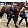 Mr. Z Preakness Walkover<br /> Dave Harmon Photo