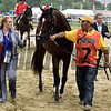 Divining Rod 2015 Preakness walkover.<br /> Dave Harmon Photo