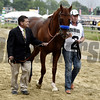 Dortmund 2015 Preakness Walkover<br /> Dave Harmon Photo