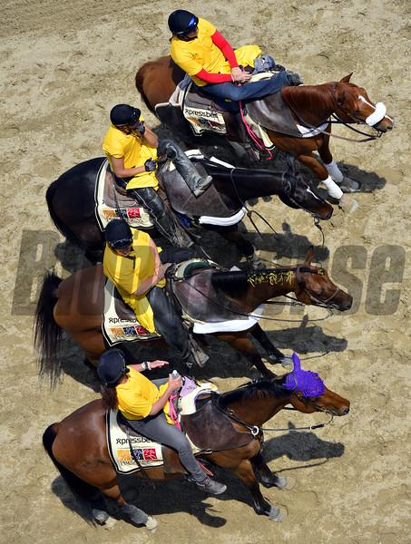 Preakness Scene Ponies Chad B. Harmon