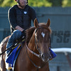 Governor Malibu out for his morning exercise at Belmont Park.  Photo by Skip Dickstein