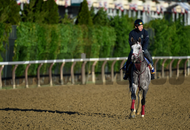 Lani out for his morning exercise at Belmont Park.  Photo by Skip Dickstein