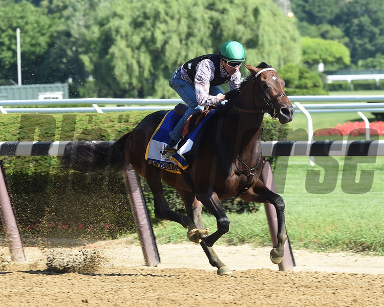 Exaggerator works at Belmont Park June 7, 2016<br /> Coglianese Photos
