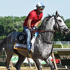 Cherry Wine at Belmont Park June 7, 2016<br /> Coglianese Photos