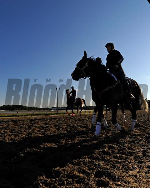 Morning training scene at Belmont training scene.
