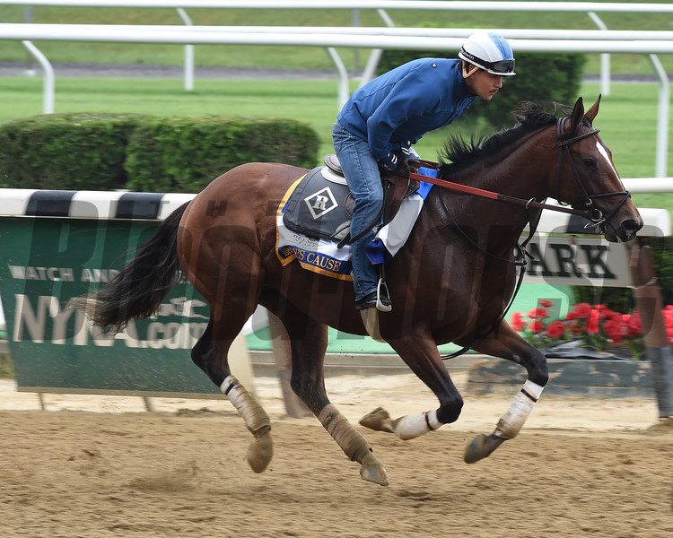 Brody's Cause, Belmont Park, June 3, 2016<br /> Coglianese Photos