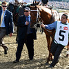 Gun Runner<br /> Kentucky Derby walkover<br /> Dave Harmon Photo