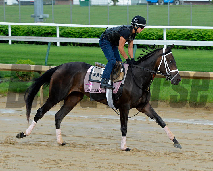 Mo D'Amour<br /> Works at Churchill Downs on May 1, 2016, in Louisville, Ky.