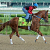 Gun Runner works<br /> Works at Churchill Downs on May 2, 2016, in Louisville, Ky.