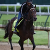 Exaggerator out for morning work May 4, 2016 Pre Derby. Photo by Skip Dickstein