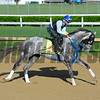 Horses on track at Churchill Downs in Louisille, Ky., on April 29, 2016. Creator