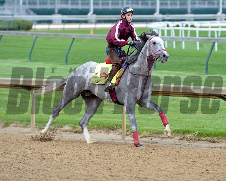 Lani<br /> Works at Churchill Downs on May 3, 2016, in Louisville, Ky.