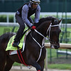 Majesto out for morning work May 4, 2016 Pre Derby. Photo by Skip Dickstein