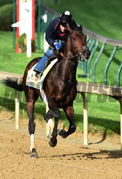 Mo Tom gets morning exercise May 5, 2016 at Churchill Downs in Louisville, K.Y.  Photo by Skip Dickstein