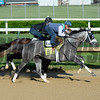 Horses on track at Churchill Downs in Louisille, Ky., on April 29, 2016. Destin