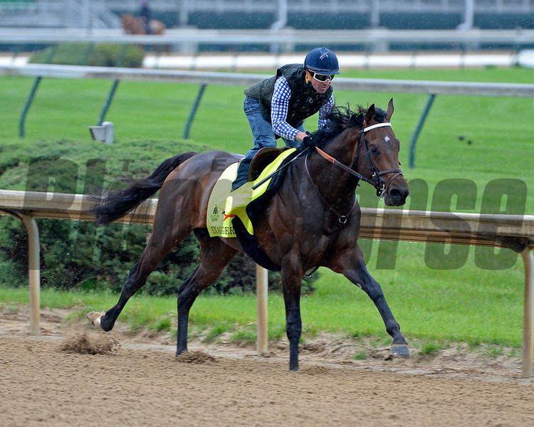 Exaggerator with Kent Desormeaux working<br /> Works at Churchill Downs on April 30, 2016, in Louisville, Ky.<br /> Anne M. Eberhardt Photo