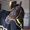 Danzing Candy Churchill Downs Chad B. Harmon