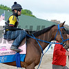 Cathryn Sophia to track for first time<br /> Works at Churchill Downs on May 2, 2016, in Louisville, Ky.