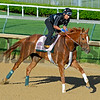 Horses on track at Churchill Downs in Louisille, Ky., on April 29, 2016. Weep No More
