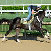 Horses on track at Churchill Downs in Louisille, Ky., on April 29, 2016. Tom's Ready