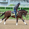 Brody's Cause<br /> Works at Churchill Downs on May 4, 2016, in Louisville, Ky.
