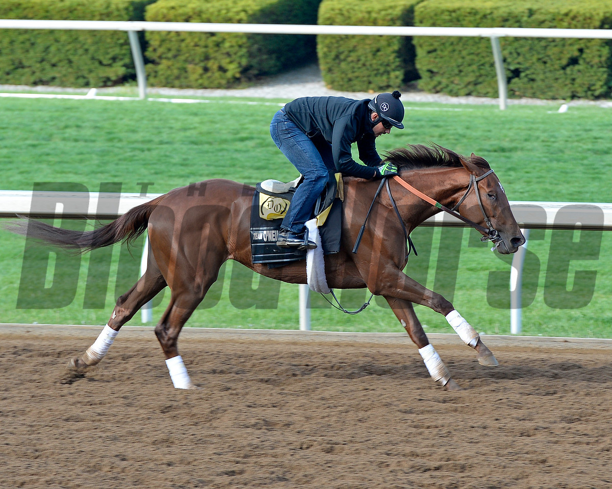 Land Over Sea working in 5 furlongs in 1:02.20.<br /> Morning works and scenes at Keeneland in Lexington, Ky., on April 23, 2016.