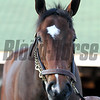 Terra Promessa Churchill Downs Chad B. Harmon