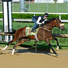 Horses on track at Churchill Downs in Louisille, Ky., on April 29, 2016. Suddenbreakingnews