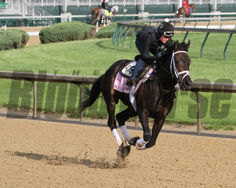 Mo d'Amour Churchill Downs Chad B. Harmon